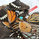 A pack of Real Butterfly Wings (approx 50-100 pcs) artistic decoration M3