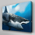 A113 Painted Great White Shark Canvas Art Ready to Hang Picture Print