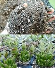 Succulent Cactus Potting Soil 5 Cups-6 Gallon Fast Draining Wicking Mycorrhizae