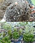 Succulent Cacti Potting Soil Mix Crassula Sedum Gasteria Haworthia Sempervivum  cheap