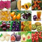Varity Rare Seeds Heirloom Passion Fruit Sweet melon cherry purple tomato pitaya