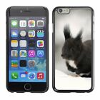Hard Phone Case Cover Skin For Apple iPhone Beasts black squirrel in