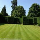 Grass Seed FINE LAWN - Top Quality Front Lawn Mix, (DEFRA Certified Seed)