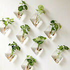 2Wall Hanging Green Plant Wall Hanging Planter Box Pot Clear Glass Flower Holder