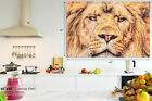 A447 Golden African Lion Close Up Animal Canvas Wall Art Framed Picture Print
