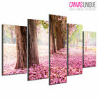PC394 Cherry Blossom Trees Bloom  Scenic Multi Frame Canvas Wall Art Print