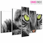 5PA307 Grey Cat Green Eyes Angry Animal Multi Frame Canvas Wall Art Print