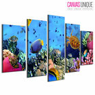 5PA343 Oceanic Sea Life Coral Reef Animal Multi Frame Canvas Wall Art Print