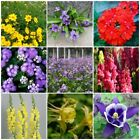 Flower Seeds Snapdragon Verbena tropic ageratum Violet Coreopsis Columbine
