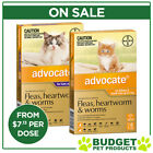 Advocate For Cats & Kittens - 3/6/9 Pack - All Sizes