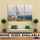 3 Panel Canvas Picture Print - Whitetail Deer on Hill Mountain 3.2