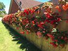 """6  PLANT POT HOLDERS HANGERS TO HANG 5"""" FLOWER POTS ON A SCREW IN FENCE OR WALL"""