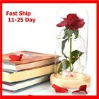 Enchanted Red Rose Flower Glass Lamp - Best Gift For Her - Beauty and The Best