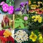 Beautiful Flower Seeds Richly colorful Garden decoration Flower Plant
