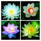Внешний вид - 10pcs/bag lotus flower  Aquatic plants bowl lotus water lily seeds Perennial Pla