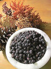Juniper Berries - Dried, powder - Wild Harvest from the Appalachian Mountains
