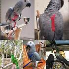 Parrot Bird Leash Adjustable Harness Pets Anti Flying Outdoor Training Bite Rope