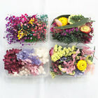 1 Box Mixed Dried Flowers Plants Candle Aromatherapy Filling Epoxy Craft Supply