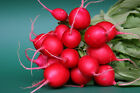 "Radish ""Cherry Belle"" - So Good and Crunchy!!  Juicy & Tasty!!! FREE SHIPPING!!!"