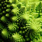 Cauliflower Seeds - Romanesco Ottobrino - An early season Romanesco - Free Ship!