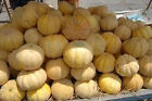 GIANT! Sweet Juicy Cantaloupes-WOW! Look at These!!! HUGE Juicy Melons!!! TA