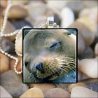 """SWEET SLEEPING SEAL"" CUTE SEAL FACE GLASS TILE CHARM PENDANT NECKLACE KEYRING"