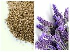Pin cushion filler Ground Walnut Shells Lavender Scented 3kg