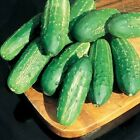 Regal High Yield F1 Pickling Cucumber Seeds - perfect for making chips or spears