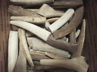 1 ALL NATURAL ELK ANTLER PIECE*TREAT*TOY*PET*REAL*BONE*CRAFTS*HANDLES*CARVING