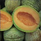 Amish Melon Seeds - Sweet orange flesh is very juicy with full muskmelon flavor