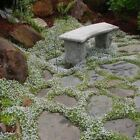 Snow in Summer Flower Seeds (Cerastium Tomentosum) 200+Seeds