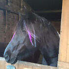 Horse Mane & Tail Extensions ( Equine Happy pony decoration fancy dress )