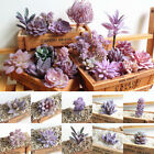 Purple Succulents Artificial Real Touch Plant Fake Foliage Home Flower Decor