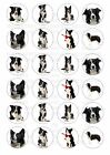 24 Border Collie Iced / Icing / Frosting Cupcake Topper Edible Fairy Cake Tops