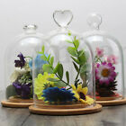 Clear Glass Display Cloche Bell FlowerJar Dome Immortal Preservation Wooden Base