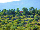 Olive and Almond farm. Home with land, stables,privacy. Catalonia Spain