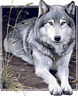 wolf lover t-shirt youth awesome school shirt top clothes boy girl US sz *