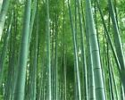 Bamboo Forest Art Canvas Poster Print Artwork