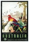 Australian Parrots Native Birds Vintage james Northfield Travel Poster Australia