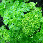 Parsley Seeds  'Triple Curled' A Beautiful Garnish-High in vitamin C - Free Ship