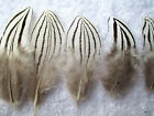 Free shipping precious pheasant feathers 3-7cm/1.5-3inch DIY Perfect HOT natural