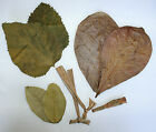 TANTORA DRIED LEAF LITTER Indian Almond Catappa Mulberry Guava Banana Leaves