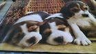 1970's Three Pets Beagles Puppy inside a basket vintage new  NOS poster HBX38