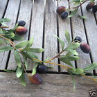 Artificial Olive Garland 5.5ft Long  - Quantity Choice 1, 2 or 3 Garlands
