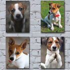 Jack Russell Dog Canvas Art Prints - Cool Funny Animal Novelty Gift