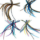 7 XXL LONG 11 -13 inch (28 - 33cm) Real Feather Hair Extensions KIT WITH RINGS!