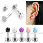 Pair 16G Steel Faux Pearl 1/4'' Bar Ear Helix Cartilage Stud Earrings Piercing