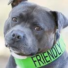 Friendly Collar for Dogs S, M, L (FC007ND) - Free Shipping
