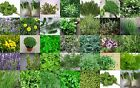 Bulk Herb seeds From  MEDITERRANEAN 38 varietes to choose Up to 85% Germination