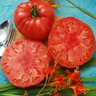 Giant Syrian Tomato Seeds - 1-3 lb. red, gorgeous, meaty, heart-shaped tomatoes